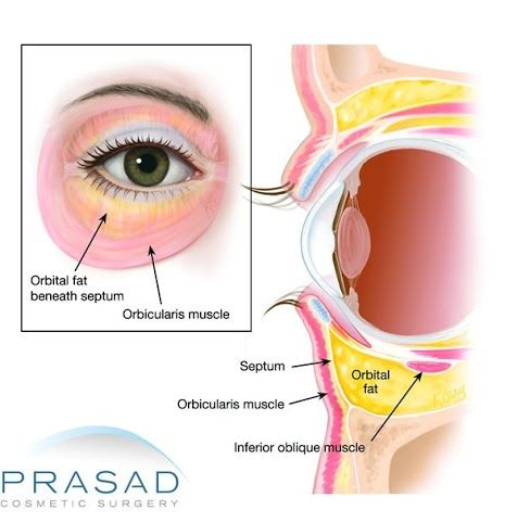 anatomy of orbital area